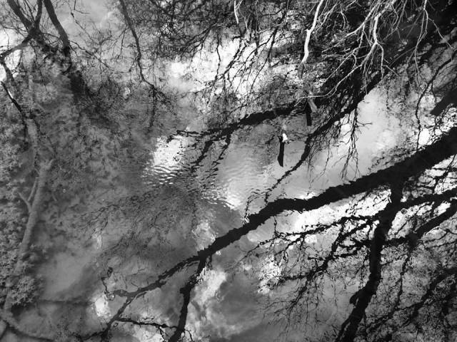 reflection b&w March 24 2015
