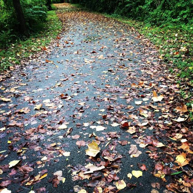 Photo by Monica R. Ashbaugh, 9/30/15 Autumn Path